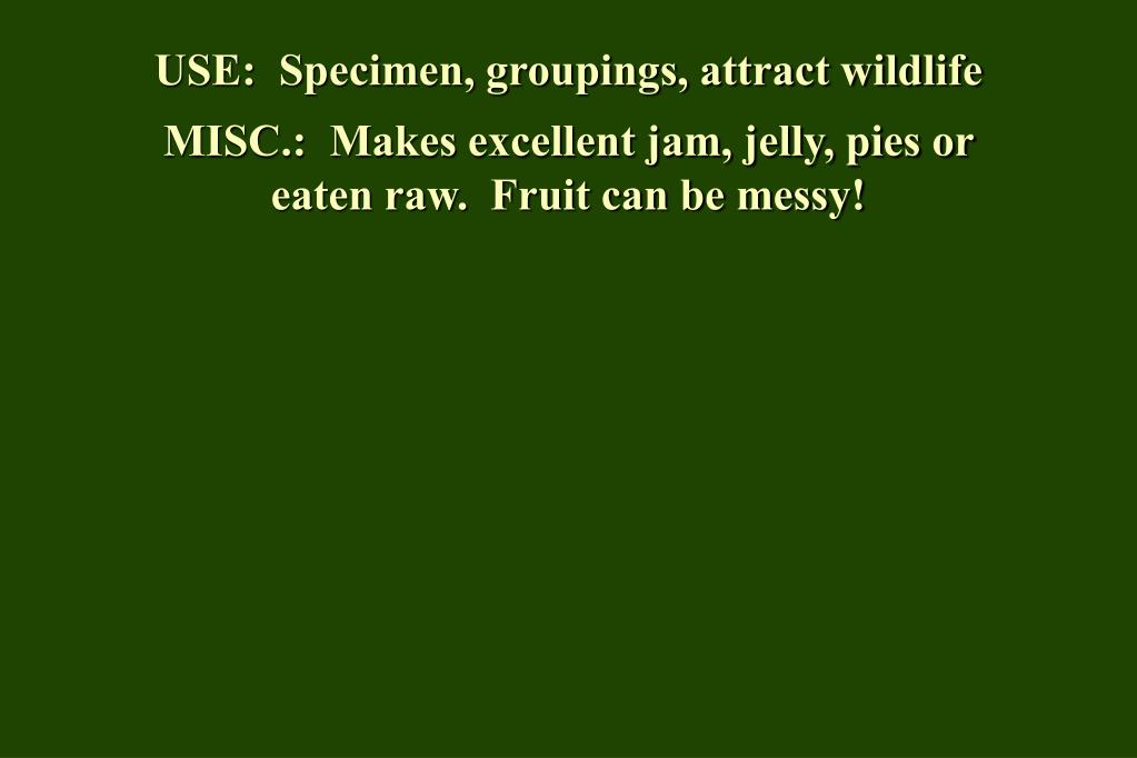USE:  Specimen, groupings, attract wildlife