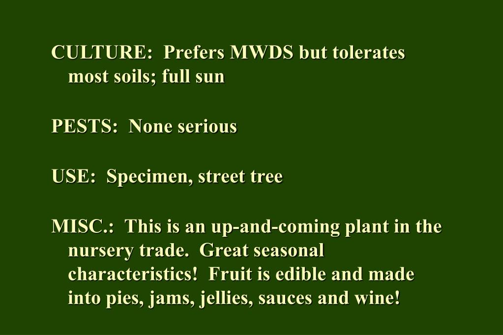 CULTURE:  Prefers MWDS but tolerates most soils; full sun