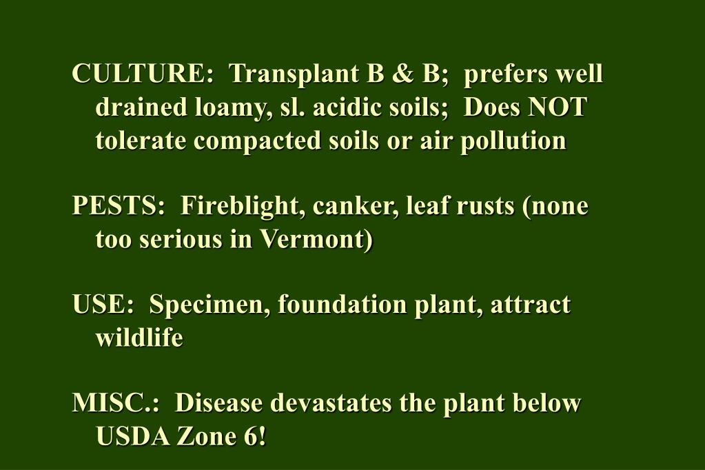 CULTURE:  Transplant B & B;  prefers well drained loamy, sl. acidic soils;  Does NOT tolerate compacted soils or air pollution