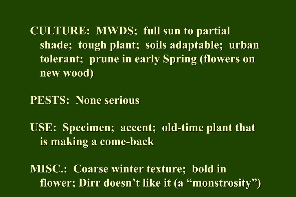 CULTURE:  MWDS;  full sun to partial shade;  tough plant;  soils adaptable;  urban tolerant;  prune in early Spring (flowers on new wood)