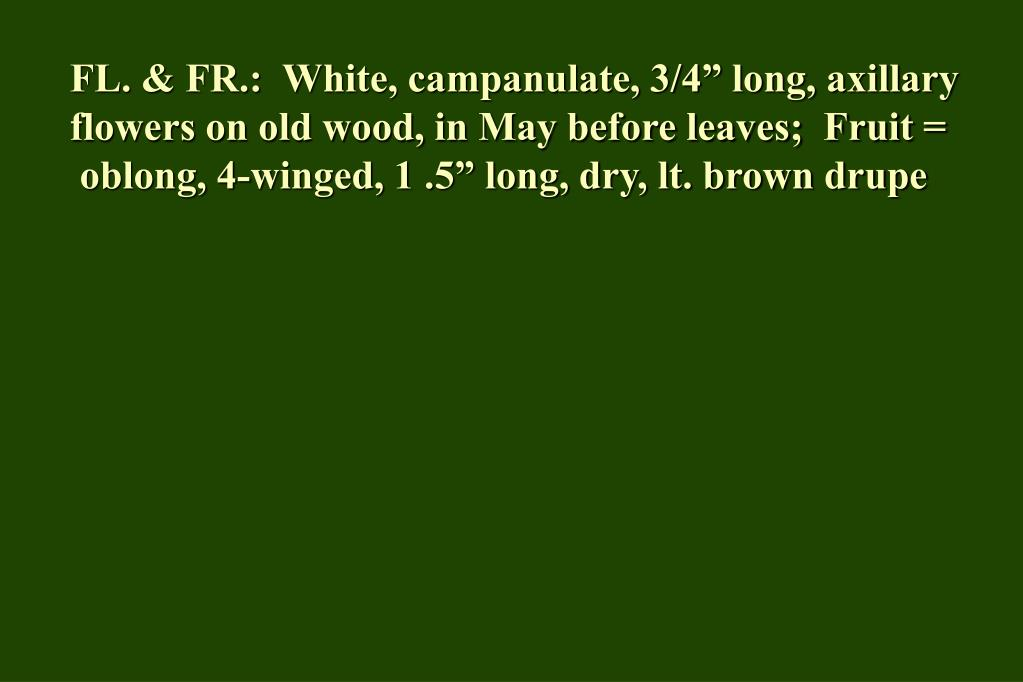 "FL. & FR.:  White, campanulate, 3/4"" long, axillary flowers on old wood, in May before leaves;  Fruit ="