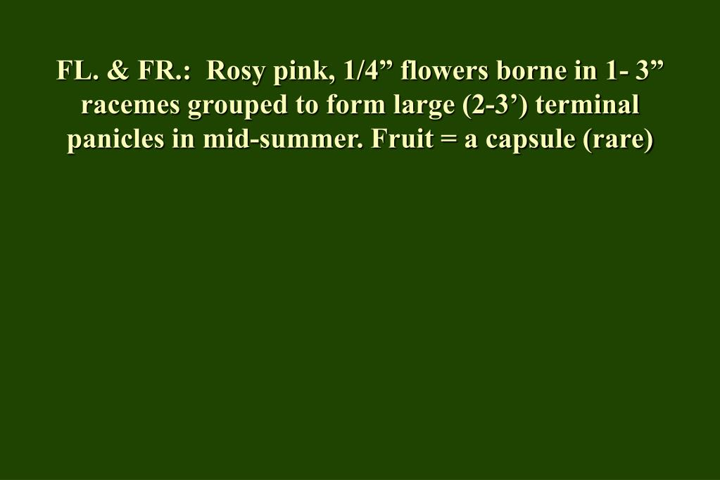 "FL. & FR.:  Rosy pink, 1/4"" flowers borne in 1- 3"" racemes grouped to form large (2-3') terminal panicles in mid-summer. Fruit = a capsule (rare)"