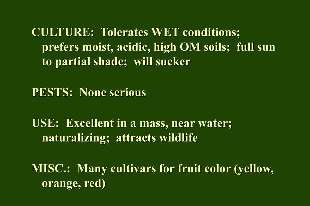 CULTURE:  Tolerates WET conditions;  prefers moist, acidic, high OM soils;  full sun to partial shade;  will sucker