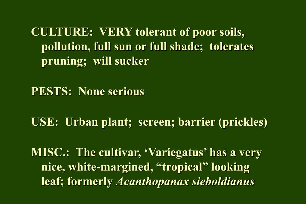 CULTURE:  VERY tolerant of poor soils, pollution, full sun or full shade;  tolerates pruning;  will sucker