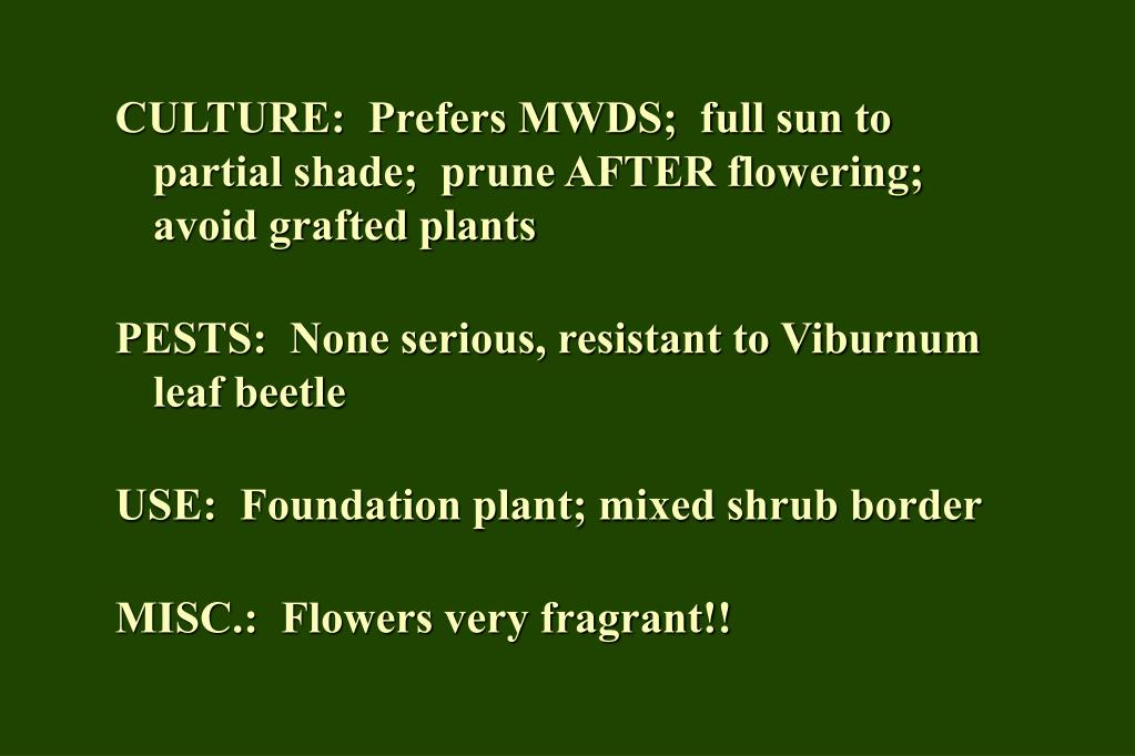 CULTURE:  Prefers MWDS;  full sun to partial shade;  prune AFTER flowering;  avoid grafted plants