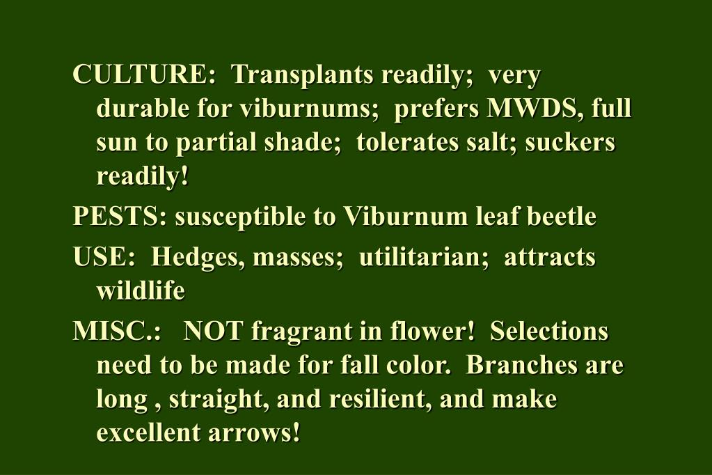 CULTURE:  Transplants readily;  very durable for viburnums;  prefers MWDS, full sun to partial shade;  tolerates salt; suckers readily!
