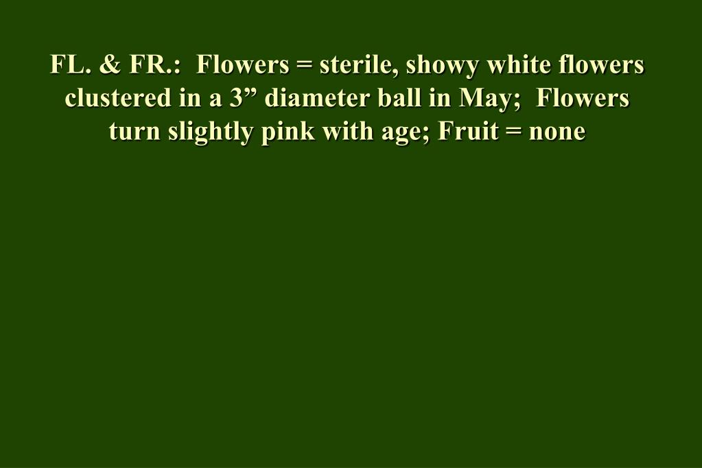 "FL. & FR.:  Flowers = sterile, showy white flowers clustered in a 3"" diameter ball in May;  Flowers turn slightly pink with age; Fruit = none"