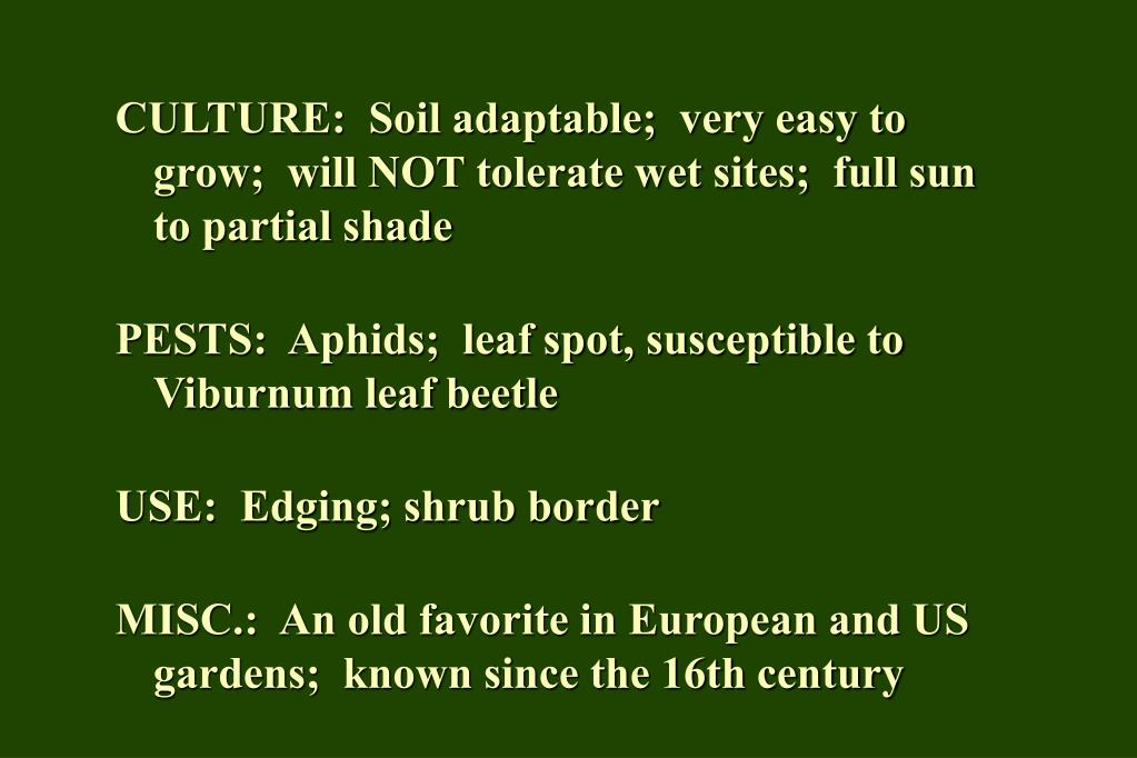 CULTURE:  Soil adaptable;  very easy to grow;  will NOT tolerate wet sites;  full sun to partial shade
