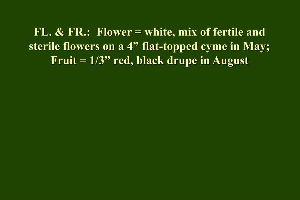 "FL. & FR.:  Flower = white, mix of fertile and sterile flowers on a 4"" flat-topped cyme in May;  Fruit = 1/3"" red, black drupe in August"