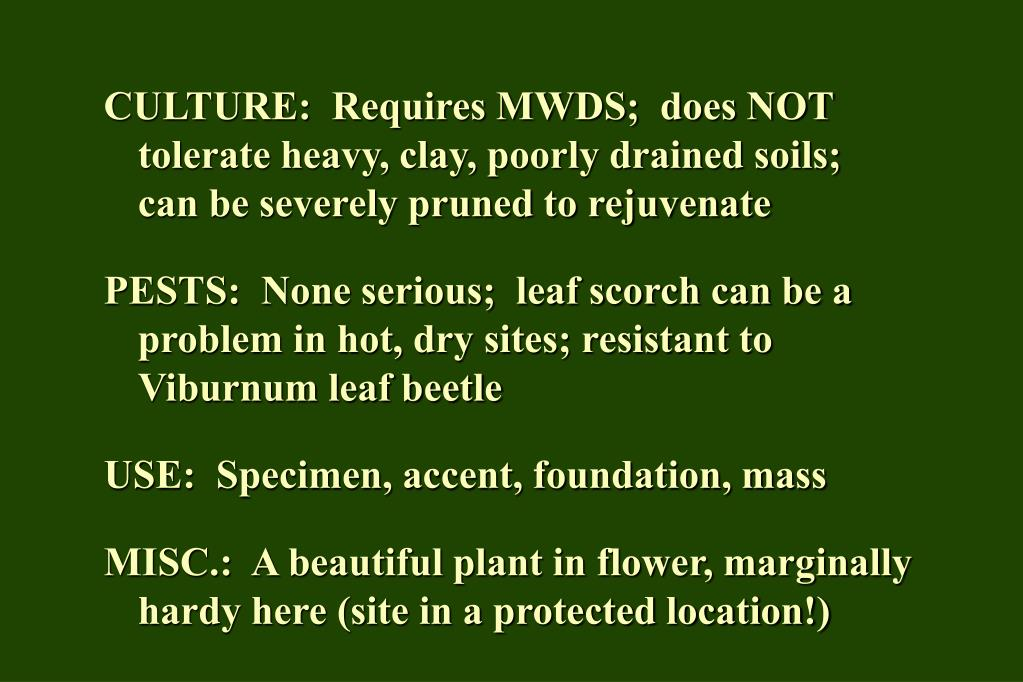 CULTURE:  Requires MWDS;  does NOT tolerate heavy, clay, poorly drained soils;  can be severely pruned to rejuvenate