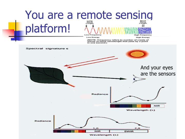 You are a remote sensing platform!