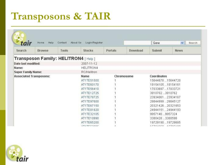 Transposons & TAIR