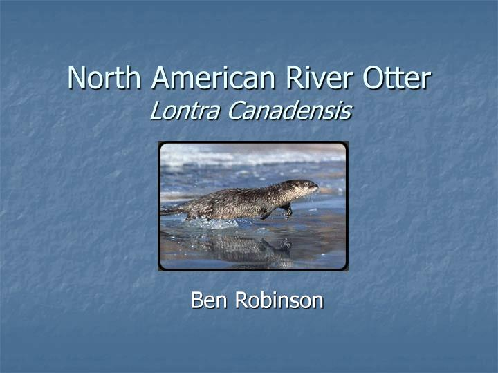 North american river otter lontra canadensis