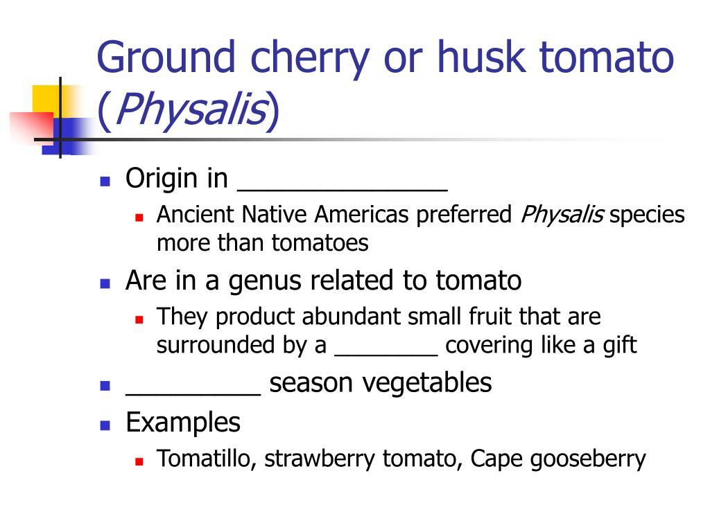 Ground cherry or husk tomato (
