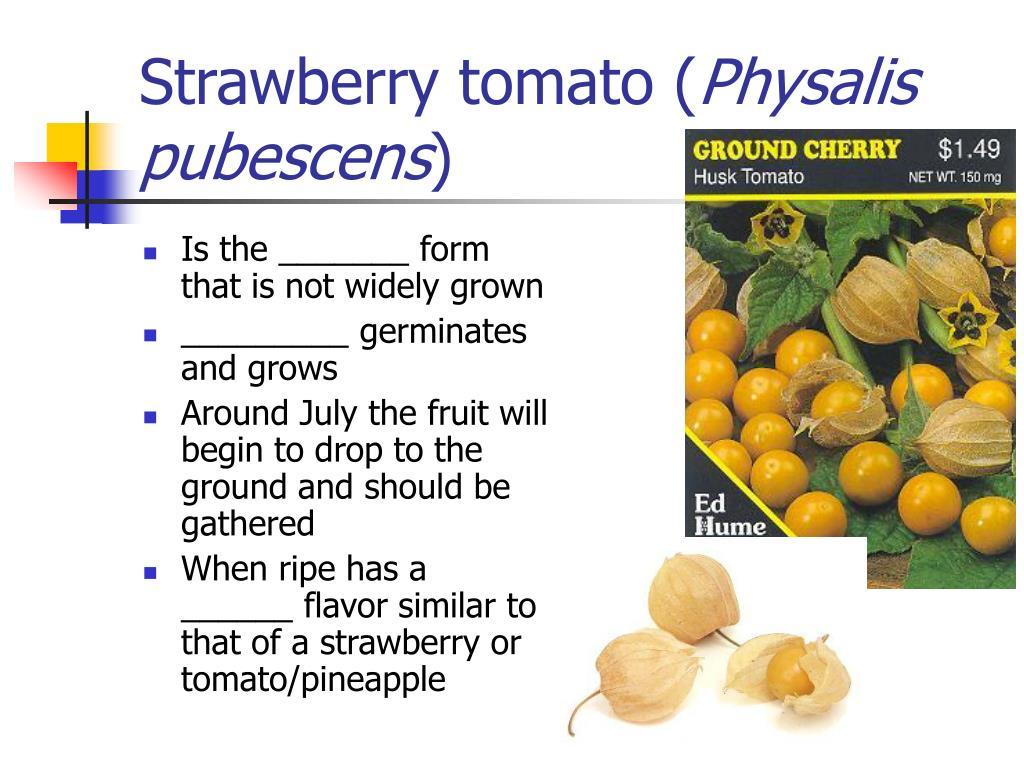 Strawberry tomato (