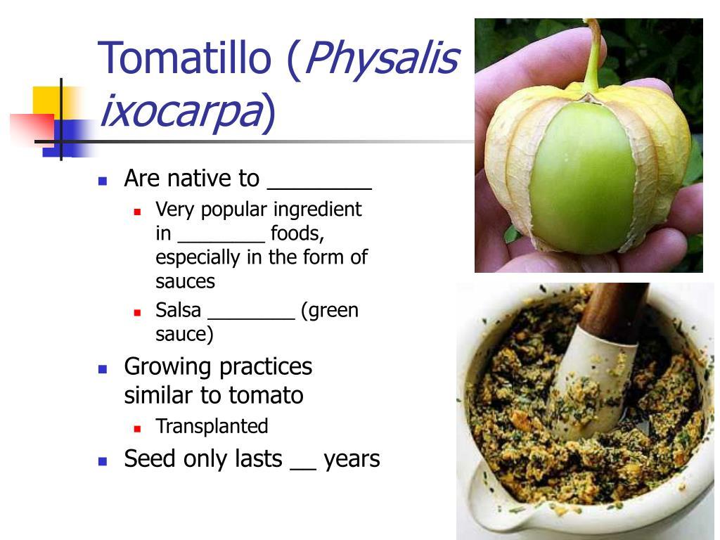Tomatillo (
