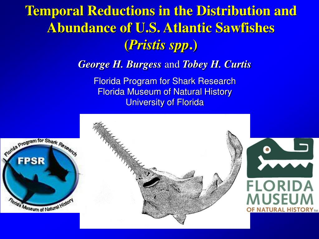 Temporal Reductions in the Distribution and Abundance of U.S. Atlantic Sawfishes   (