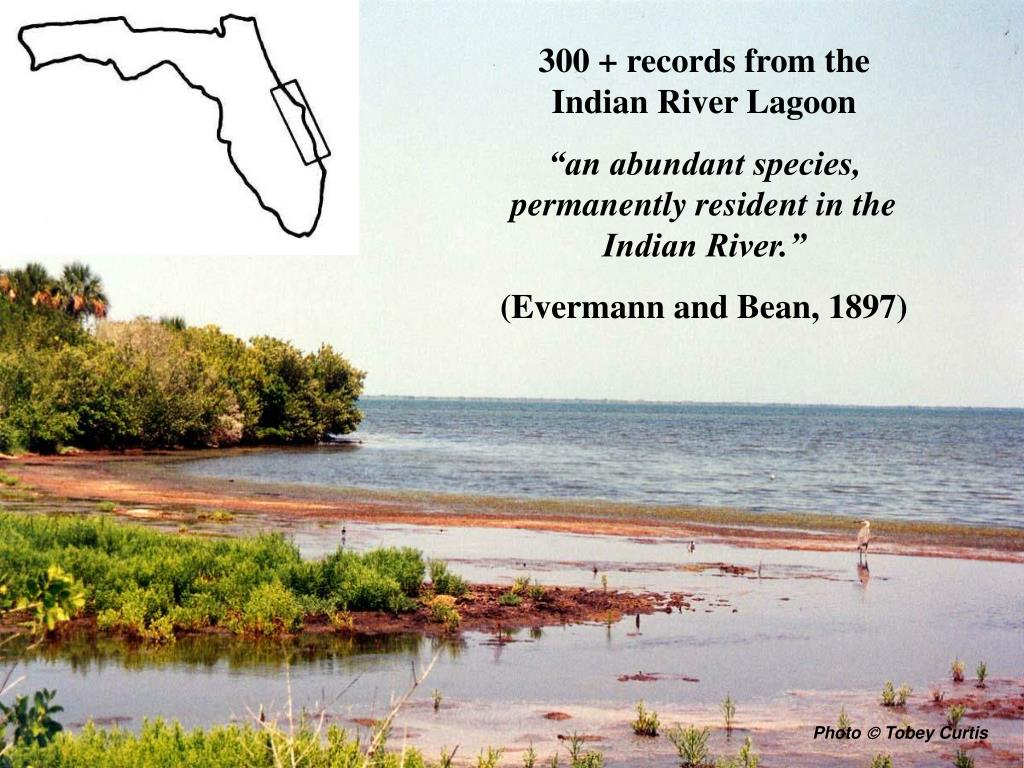 300 + records from the Indian River Lagoon