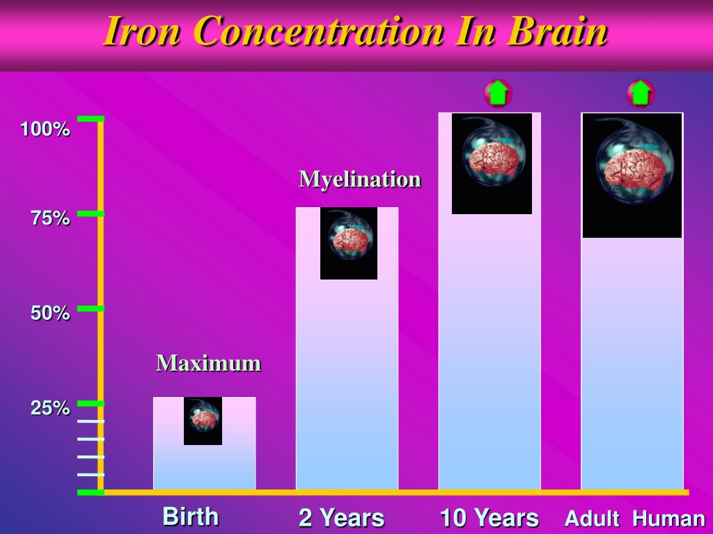 Iron Concentration In Brain