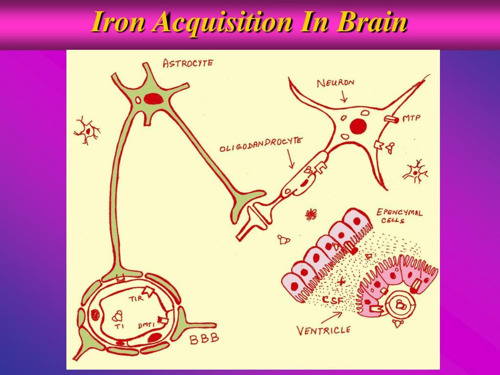 Iron Acquisition In Brain