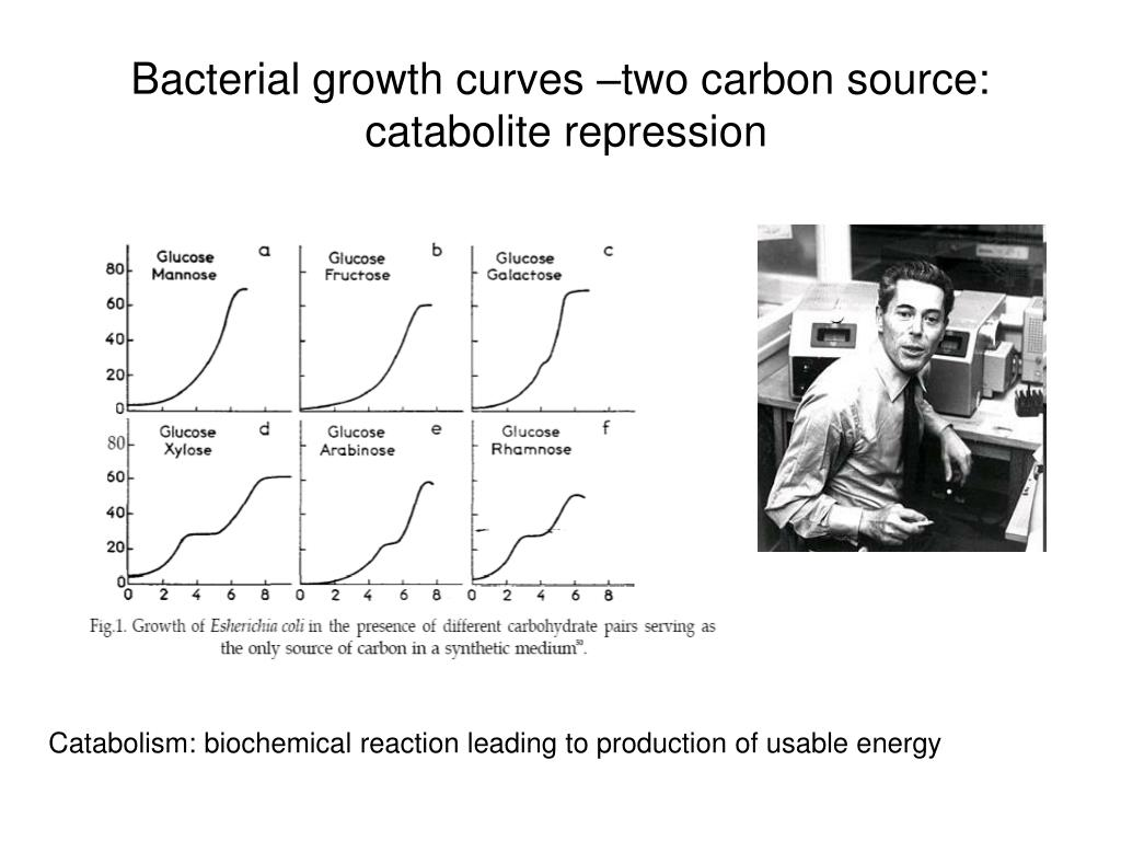 Bacterial growth curves –two carbon source: