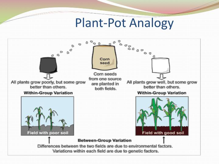Plant-Pot Analogy