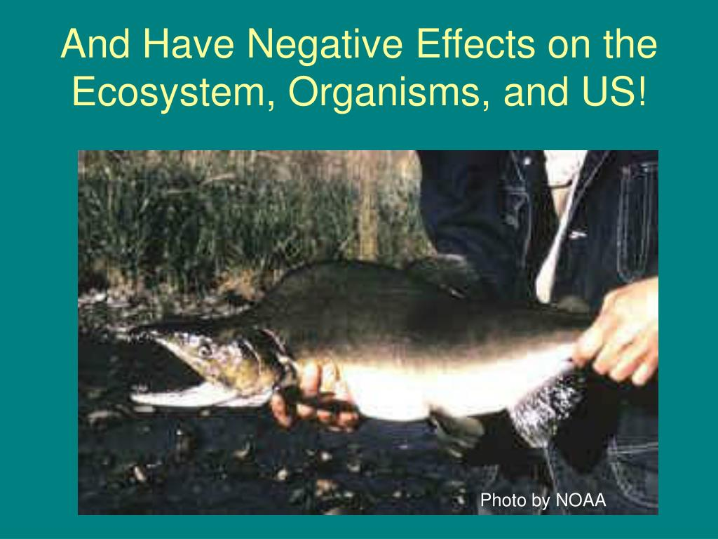 And Have Negative Effects on the Ecosystem, Organisms, and US!