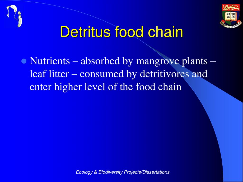 Detritus food chain