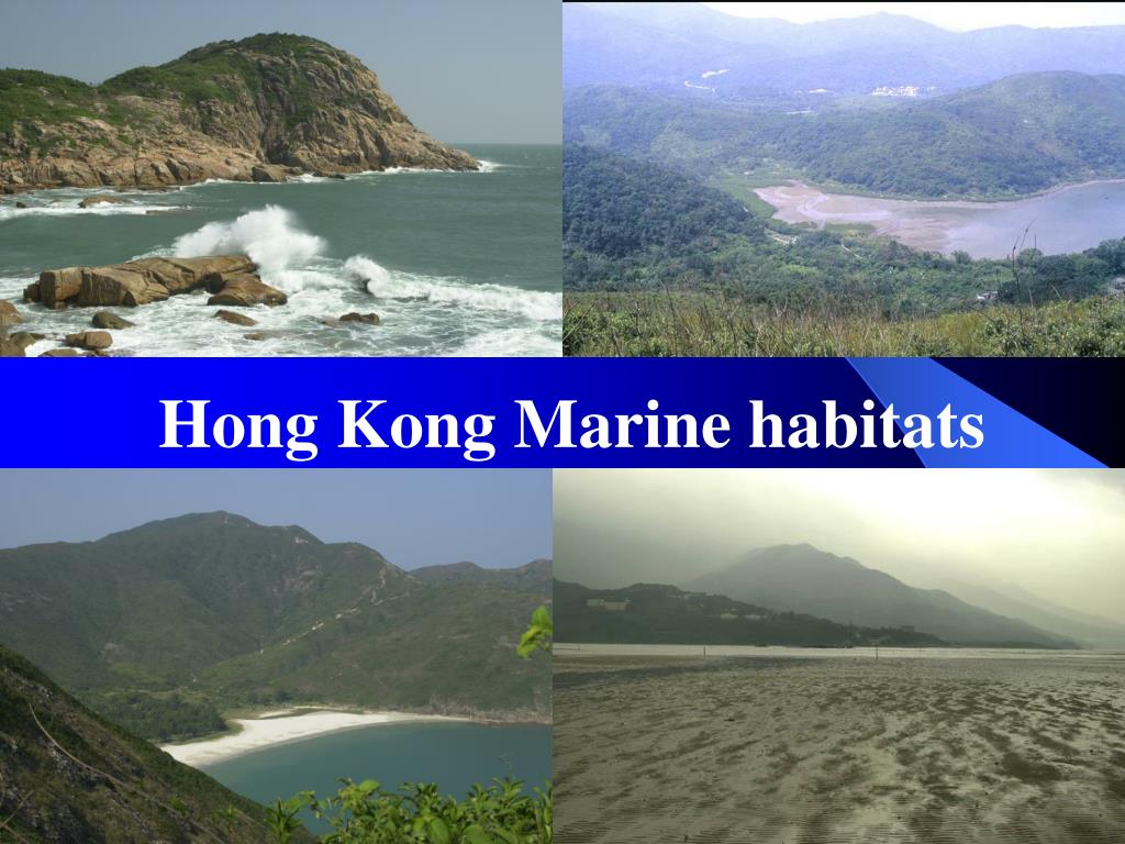 Hong Kong Marine habitats