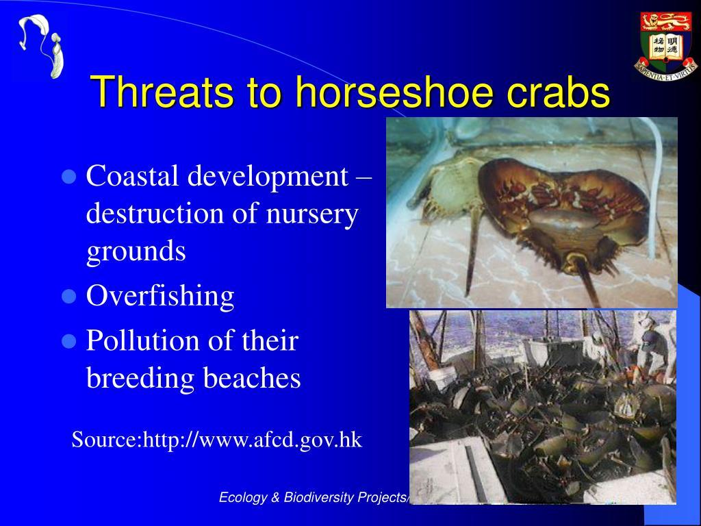 Threats to horseshoe crabs