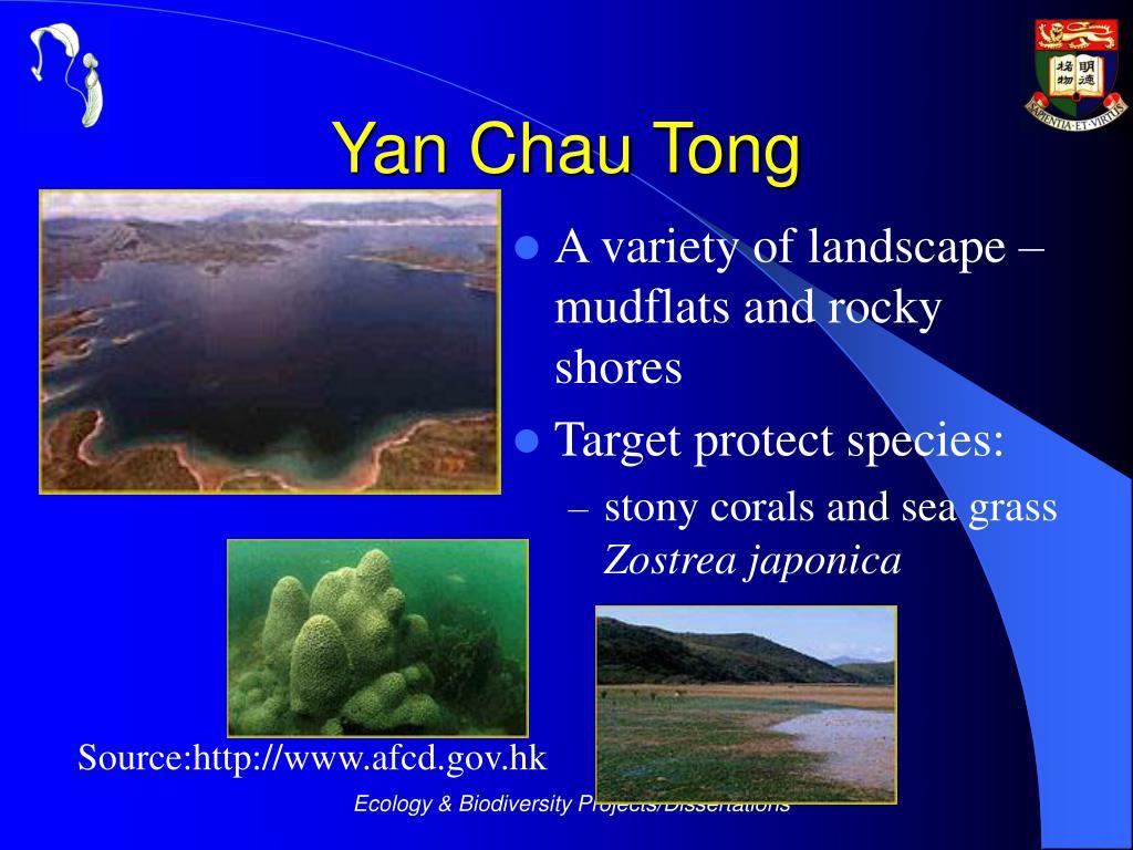 Yan Chau Tong