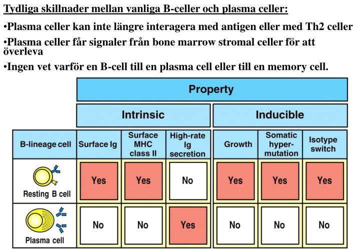 Tydliga skillnader mellan vanliga B-celler och plasma celler: