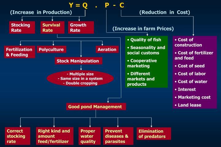 Y = Q    .    P  -  C