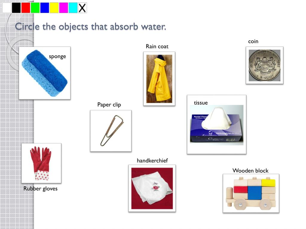 Circle the objects that absorb water.