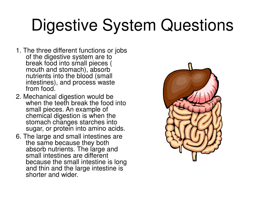 Digestive System Questions