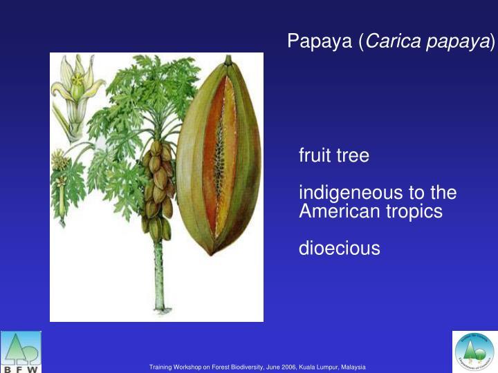 Papaya (