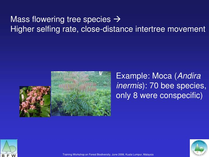 Mass flowering tree species