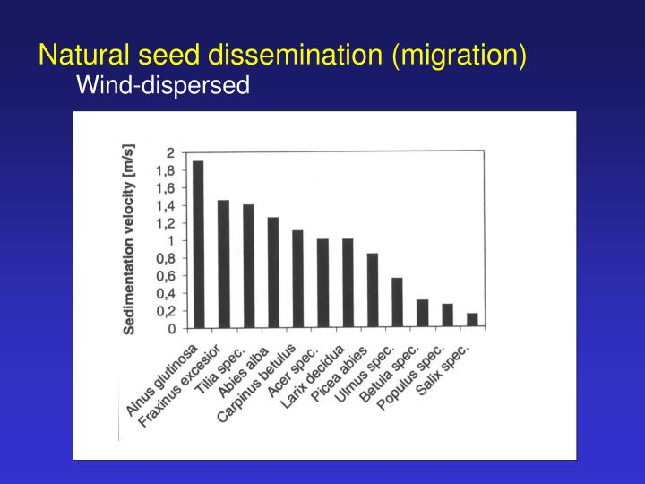 Natural seed dissemination (migration)