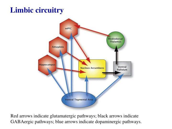 Limbic circuitry