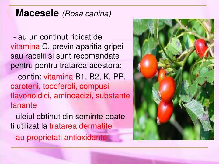 Macesele
