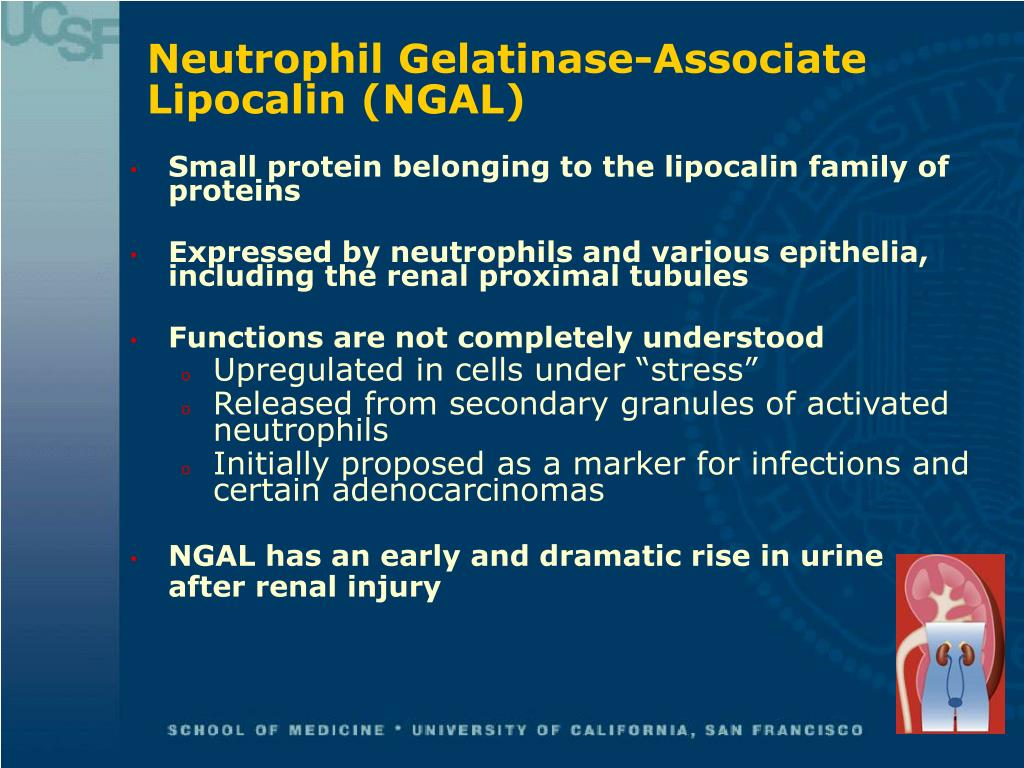 Neutrophil Gelatinase-Associate Lipocalin (NGAL)