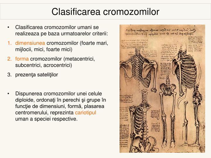 Clasificarea cromozomilor