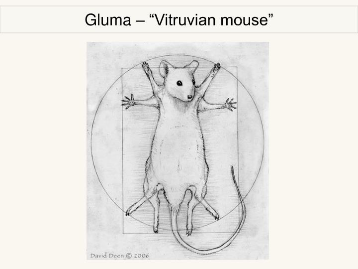 "Gluma – ""Vitruvian mouse"""