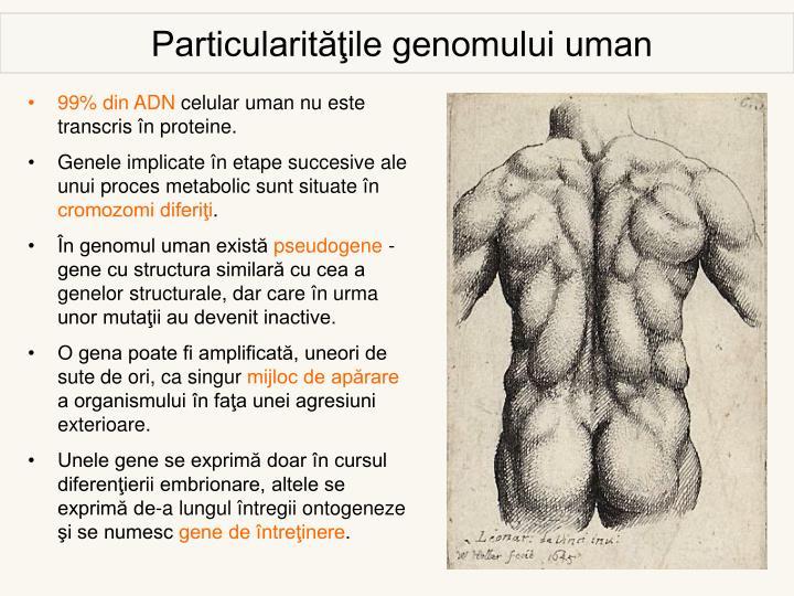 Particularităţile genomului uman