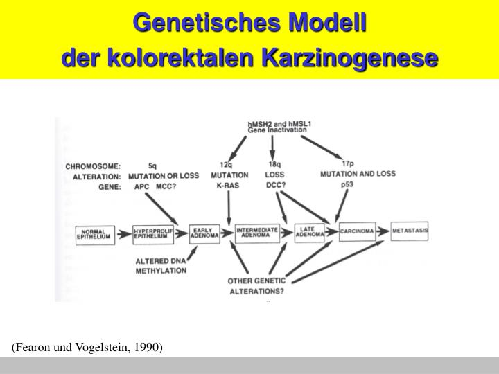Genetisches Modell