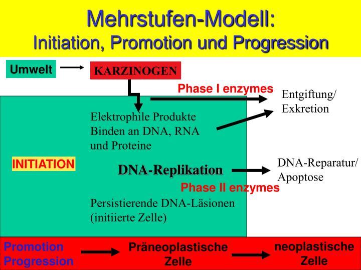 Mehrstufen-Modell: