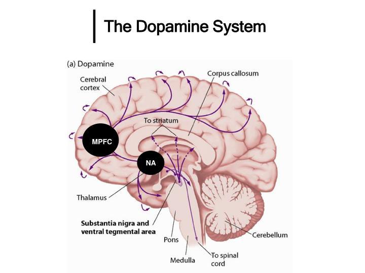 The Dopamine System
