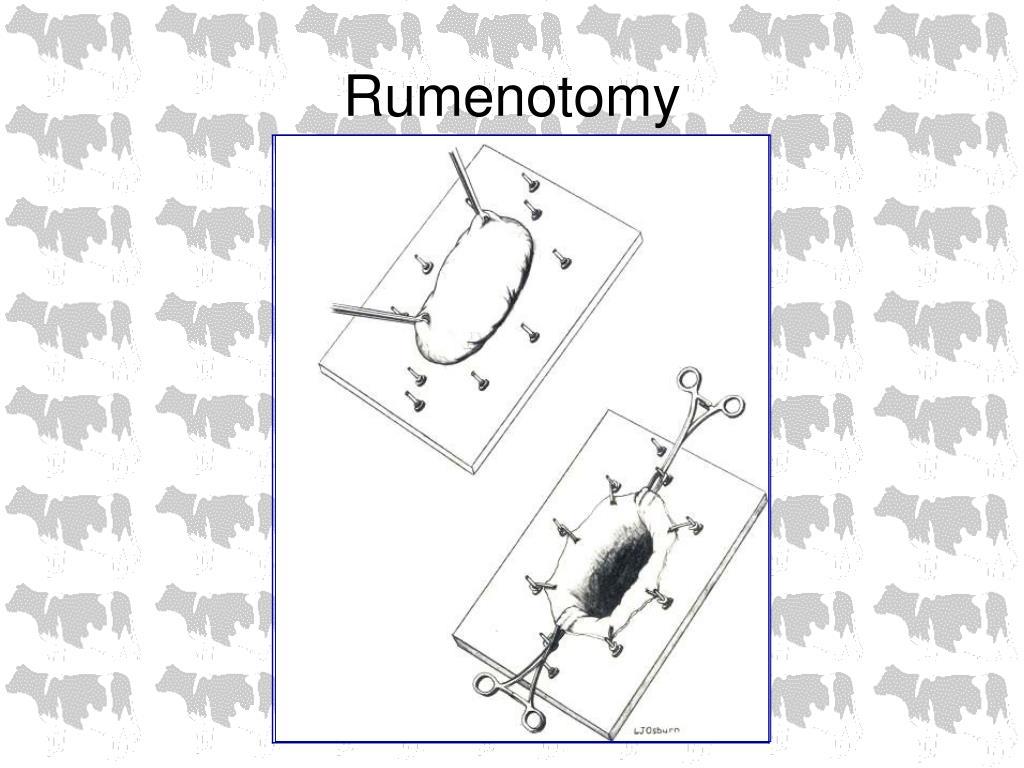 Rumenotomy