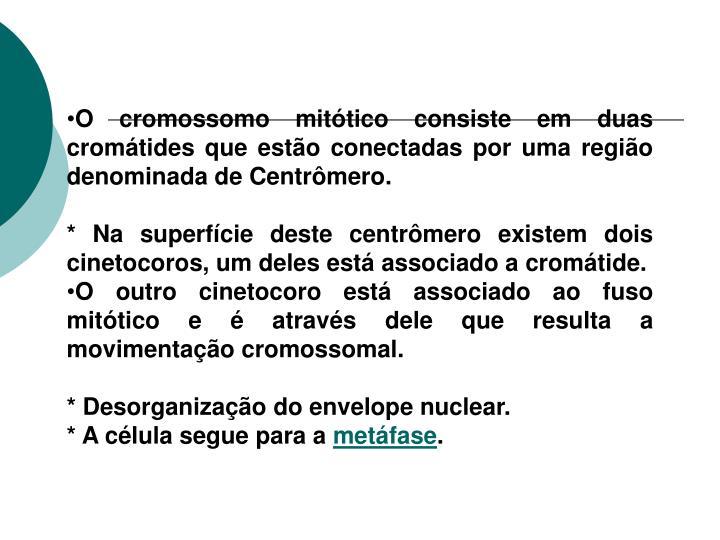 O cromossomo mitótico consiste em duas cromátides que estão conectadas por uma região denominada de Centrômero.