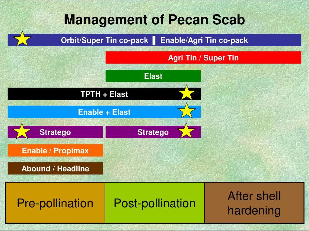Management of Pecan Scab